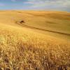 La monoculture demande plus de pesticides