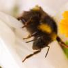 Stéphane le Foll souhaite interdire le pesticide Cruiser