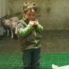 Grandir sur une ferme réduit les risques de certaines maladies