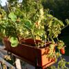 L'agriculture urbaine a le vent en poupe