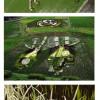 Des oeuvres artistiques géantes sur des champs de riz