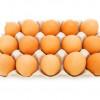 Les nouvelles normes pour poules pondeuses font augmenter le prix de l'œuf