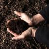 L'engrais bio, l'avenir de l'agriculture ?