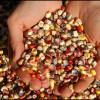 Nouvelle taxe sur les semences