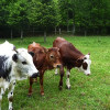 Jérôme Constant se lance dans l'agriculture grâce au financement participatif