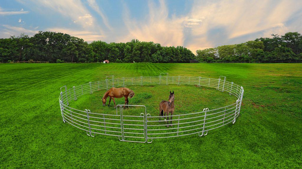 rond_de_longe_pour_chevaux_beiser_environnement